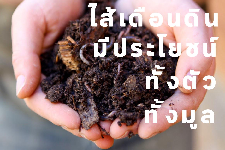 ไส้เดือนดินมีประโยชน์ ทั้งตัวและมูล