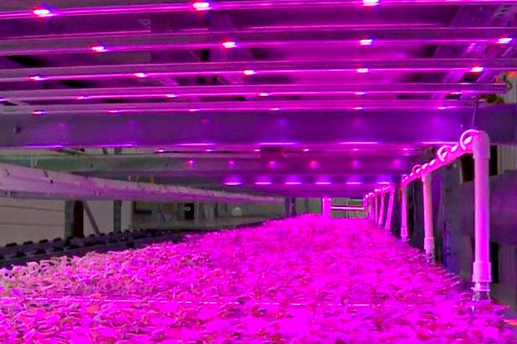 ไฟ LED เลี้ยงพืช