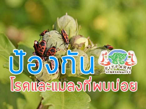 ป้องกันโรคและแมลงที่พบบ่อย